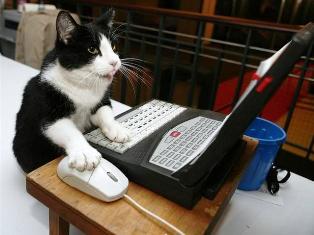 cat using facebook